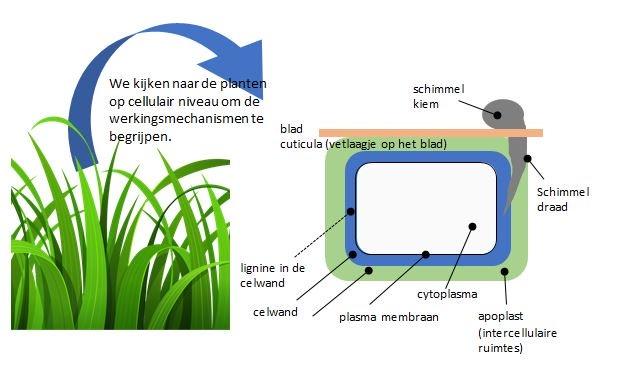 Sporenelementen voorkomen ziekten diagram.JPG