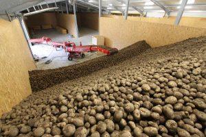 bewaring aardappelen