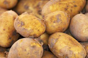 Capaciteit van het aardappelknolonderzoek seizoen 2020/2021