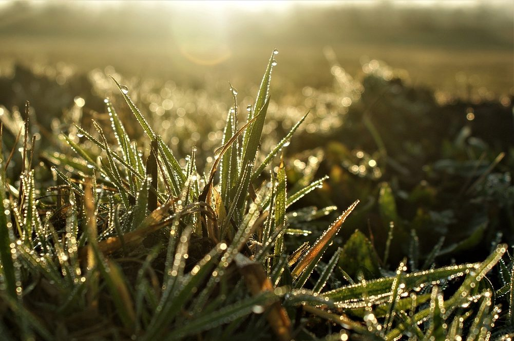 Patent voor 'moleculaire verwarmers' om opbrengst van gewassen te vergroten