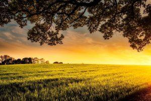 LTO Nederland: Duurzaamheid vraagt om samenwerking