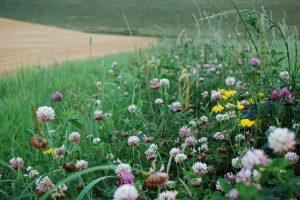 Project 'FAB+' onderzoekt de meerwaarde van bloeiende akkerranden