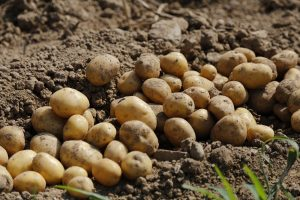 Coronacrisis niet enige zorg op boerenerf