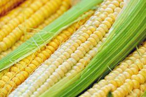 Stevig herstel prijzen agrarische grondstoffen