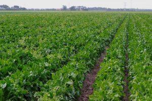 Scholing voor duurzamere landbouw met SABE-voucher