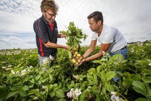 Albert Heijn versterkt samenwerking met Nederlandse groentetelers