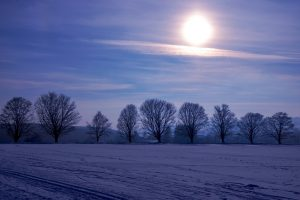 Cosun: Stevige winter kan helpen tegen bladluizen