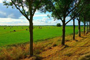 Grondkansen.nl biedt grondeigenaren kansen bij verkoop
