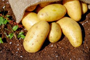 Aardappelprijzen