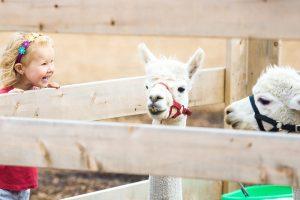 Een zorgboerderij starten zes aandachtspunten