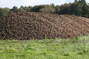 Avebe sluit aardappelcampagne 2020-2021 af
