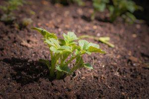 Frankrijk bundelt krachten op het gebied van plantengenetica