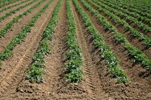 Stop de ontpoldering van landbouwgrond