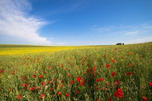 Coronasteunmaatregelen: tegemoetkoming voor land- en tuinbouw