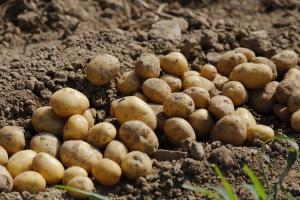 Maak kennis met duurzame en toekomstbestendige aardappelteelt