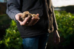 Aardappelwratziekte bij Stadskanaal blijkt fysio 38