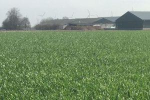 Onkruidbestrijding najaar in wintergraan en graszaad