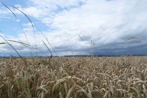 graanprijzen naar historische niveaus