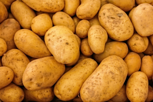 Meloidogyne toetsing op consumptie- en zetmeelaardappelen